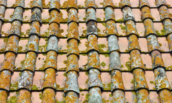 What to do if there is mildew, algae, or moss growing on your tile roof?